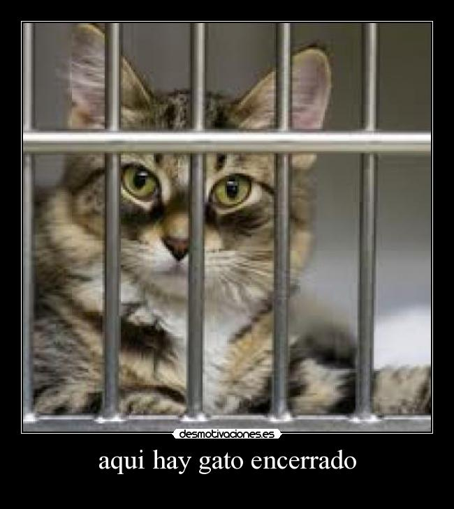 gato encerrado
