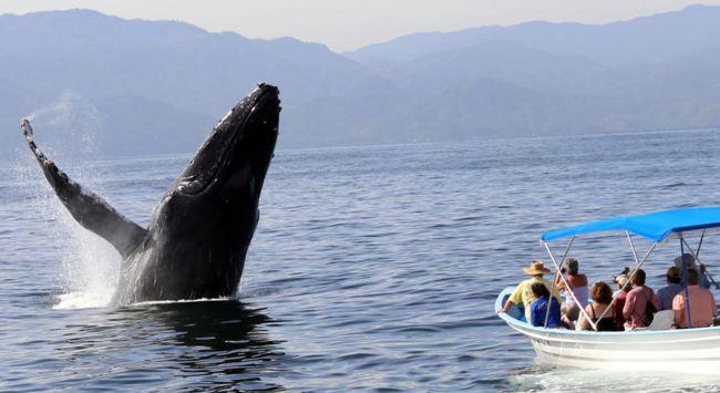 Turismo para visualizar ballenas en Costa Rica